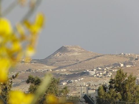 Rotem (Broom Bush) overlooking the Herodion, Kibbutz Ramat Rachel, Israel | © Melech ben Ya'aqov, Karaite Insights