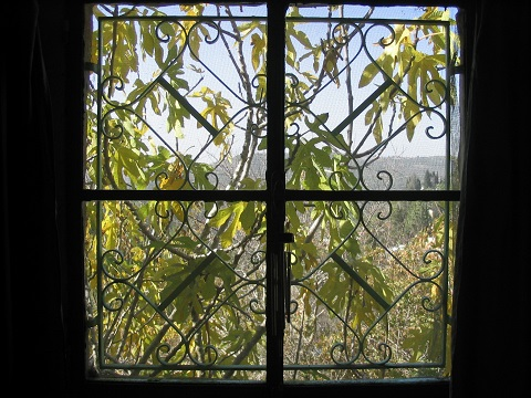The world through a window: autumn fig tree, Jerusalem, Israel | © Melech ben Ya'aqov, Karaite Insights